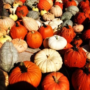 West Allis Farmers Market Pumpkins