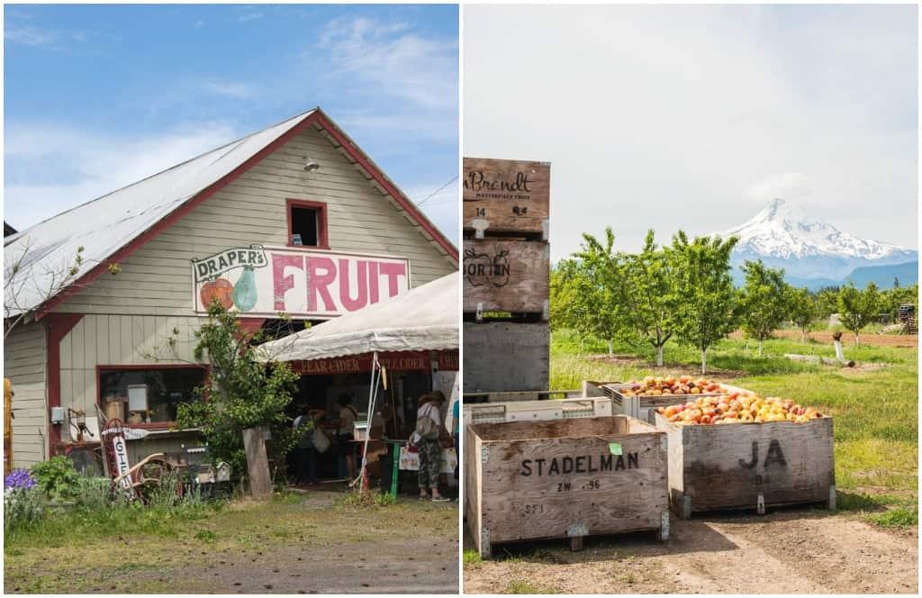 Draper Girl's Fruit Farm