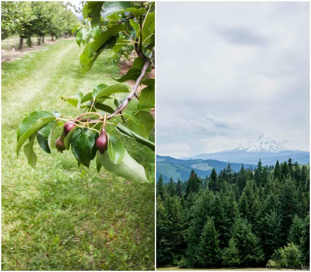 Sakura Ridge farm and lodge