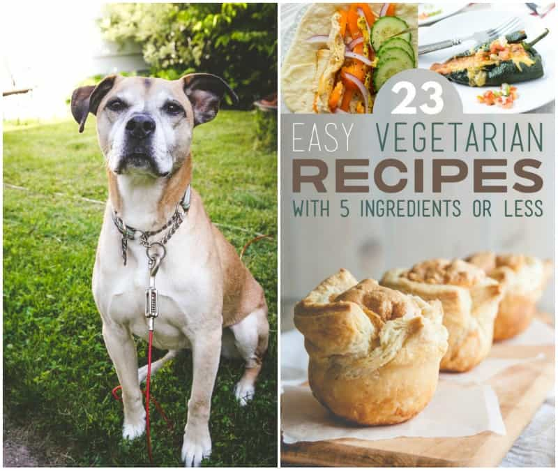 5 ingredient recipes on BuzzFeed feature from @sweetphi