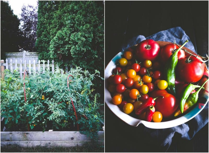 Raised planter box garden tomatoes and peppers @Sweetphi
