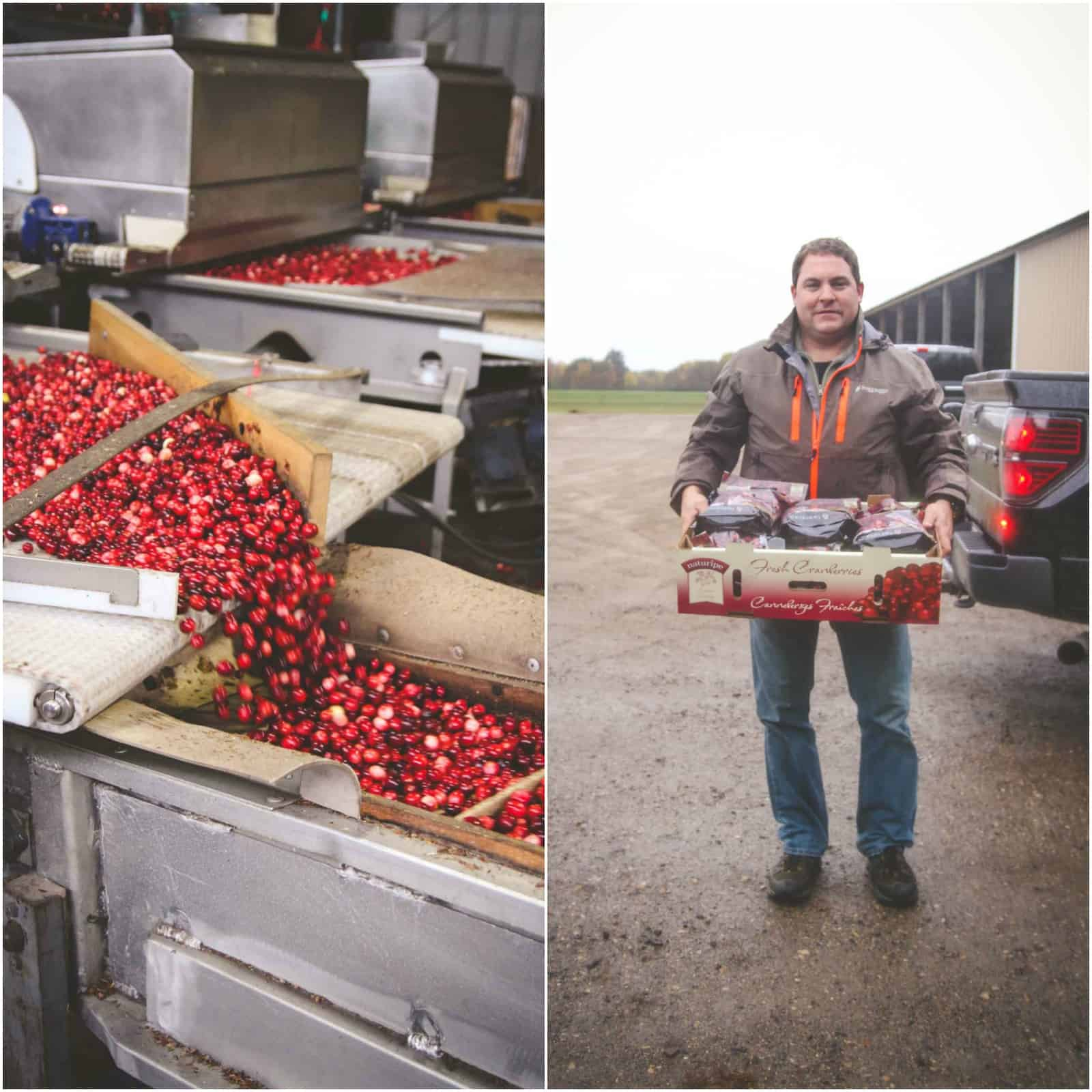 Habelman Bros Cranberries. Fresh cranberry harvest in Wisconsin
