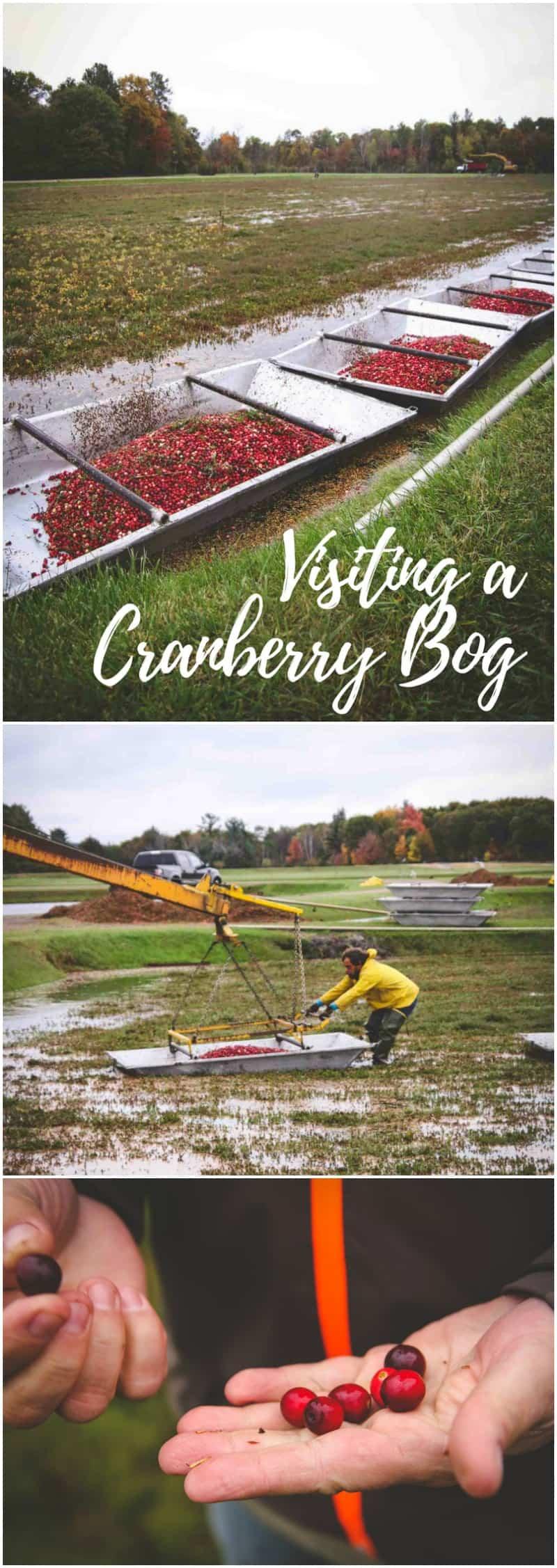 Visiting a Wisconsin cranberry bog