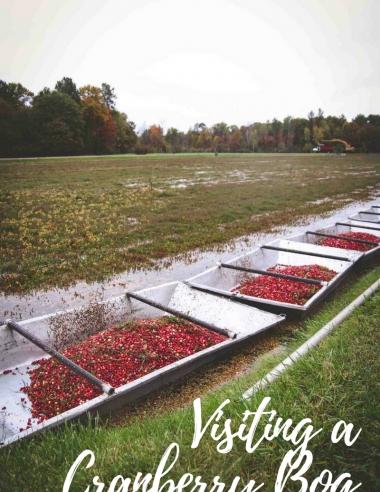 Visiting a Cranberry Bog